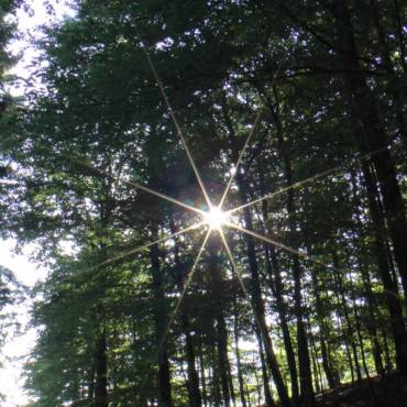 Schamanischer Waldspaziergang