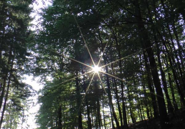 Schamanischer Frühlings-Waldspaziergang